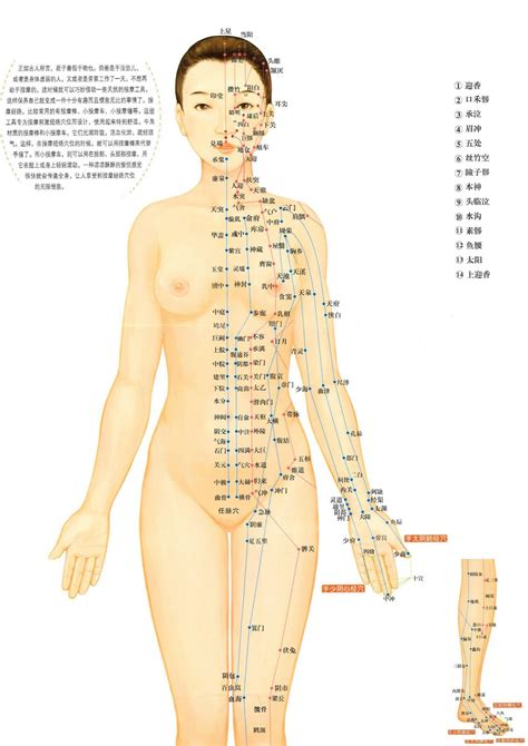 aqupressure points at the back picture 3