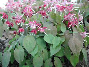herbal diuretic picture 15