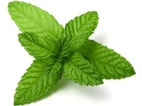 peppermint leaf picture 6