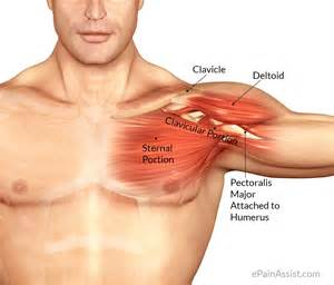 can large breast cause tendonitis in shoulder picture 5