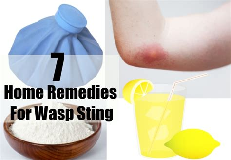 wasp stings, libido picture 1