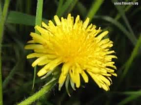handilibon herbs picture 2