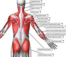 lower back muscle pain picture 6