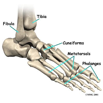 ankle joint pain picture 2