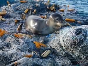 marine debris picture 5
