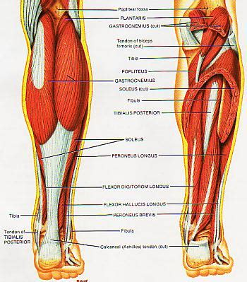 lower leg muscle pain picture 5
