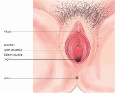 vaginal pictures at age 20 picture 3
