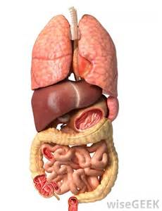 facts about the human gall bladder picture 5