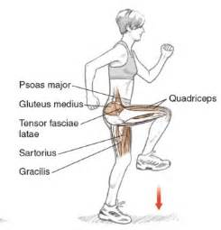 muscle used to extend the hip when clibming stairs picture 1