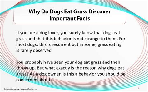 pet diet information picture 15