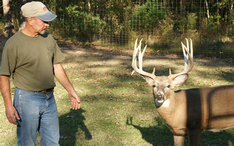 from where we get deer for deer farming picture 2