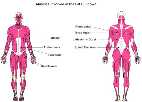 abdominal muscle pulls picture 9