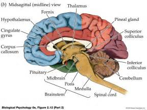 a study of the mind muscle and its picture 11
