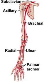 poor blood circulation  upper extremity  forearm picture 5