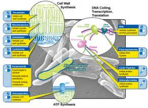 mechanism of actions of anti obesity drugs picture 6