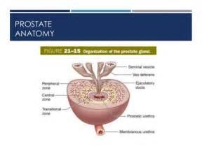 colon diagram picture 9