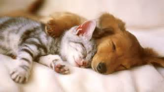 can dogs take nighttime sleep aid picture 6