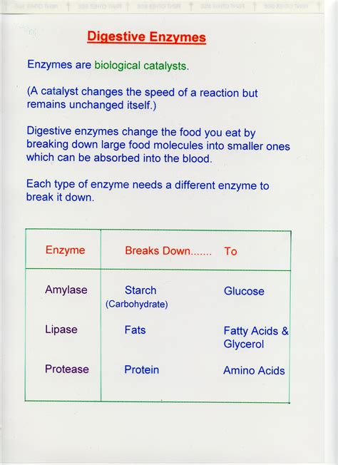 enzymes for digestion picture 6