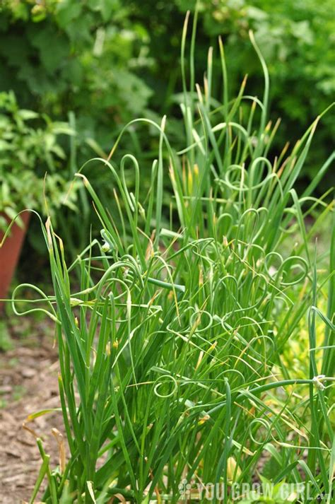 mollys plant food herbal picture 15