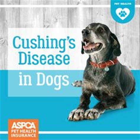 cushings diseasen the aging picture 2