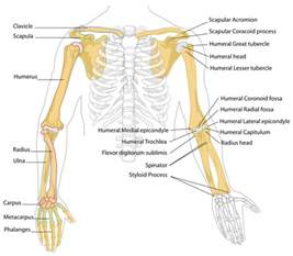 bones and joints picture 6
