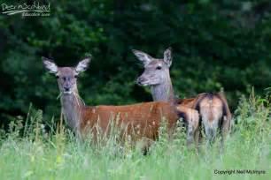 information about deer in urdu picture 14