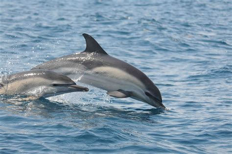 dolphin sex picture 1
