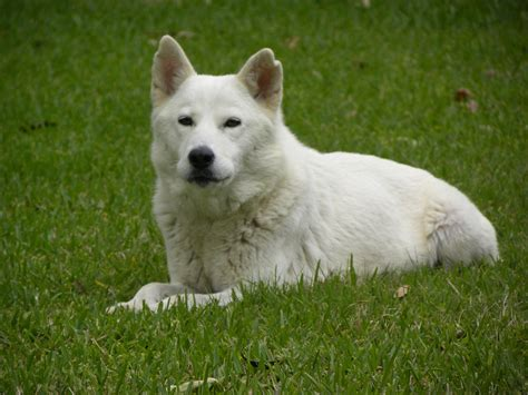 how to whiten a dog picture 7