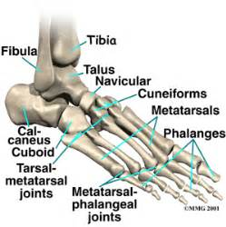 most common injuries to fifth metatarsal phalangeal joint picture 18