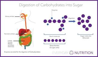 where does digestion of carbohydrates begin picture 9