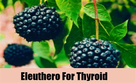 chinese natural supplements for thyroid remedy picture 12