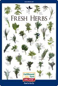 herbal guide picture 10