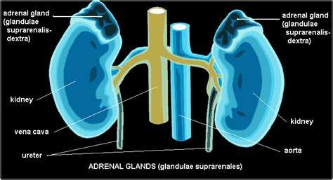 argentina thyroid glandular company picture 10