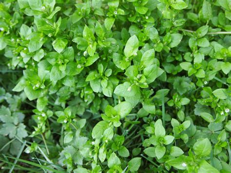 which herbal plants are best for picture 10
