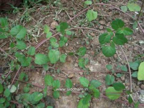 natural herbal medicines picture 3