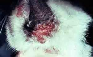 dog food for sensitive skin picture 13