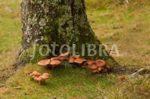 fungus pin pointe florida picture 14