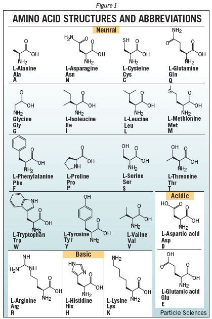 how long does it take amino acids to picture 5