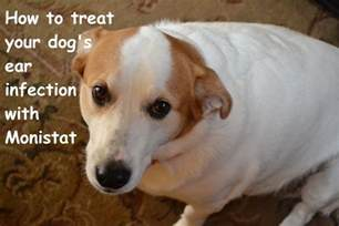 canine yeast infection picture 7