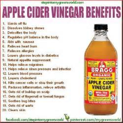 cider vinegar weight loss benefits picture 2