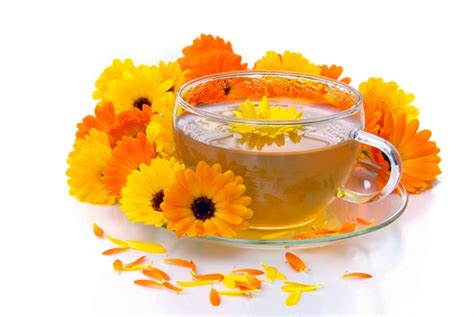 Herbal teas cancer picture 7