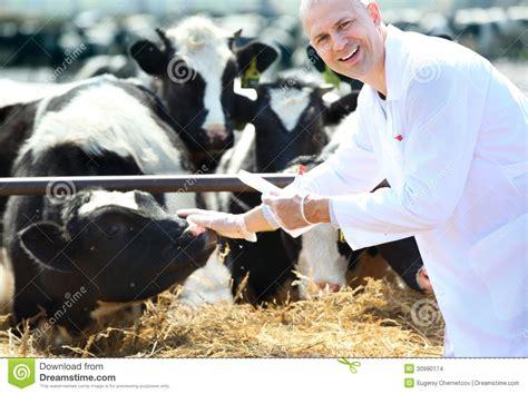 men and raw bovine picture 6