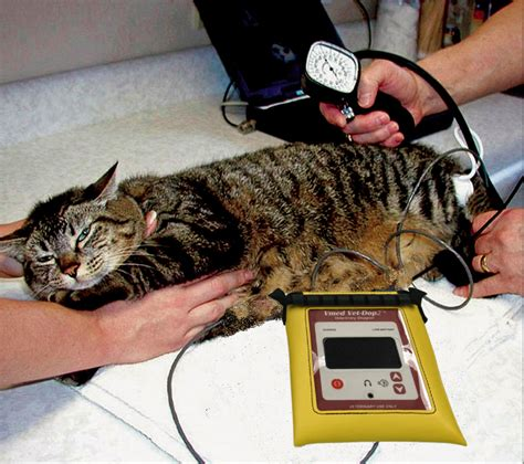 about low blood pressure picture 5