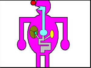 digestion animation picture 14