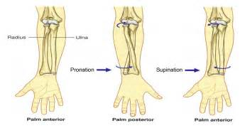 distal radial ulnar joint picture 21