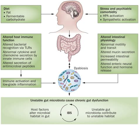 the causes of gut dysbiosis picture 1