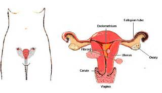 maca root for breast cysts picture 1