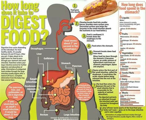 list of digestion time of foods picture 5