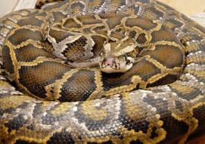 identifying snake skin types picture 6