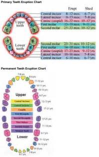 primary teeth eruption picture 9